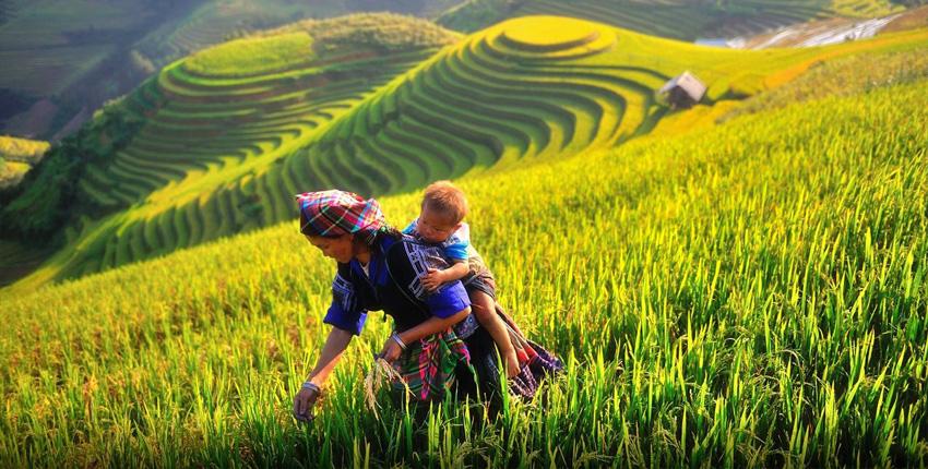 Vietnam Viaggio del Nord - 9 Giorni / 8 Notti