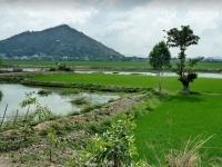 Giorno 8 : Il Delta del Mekong (colazione, pranzo)