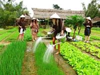 Giorno 3: Villaggio di Tra Que – il giro turistico ad Hoian (Colazione – Pranzo)